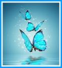 butterflymessage