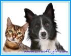 cats dogs eraoflightdotcom